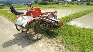 無農薬米ササニシキの除草